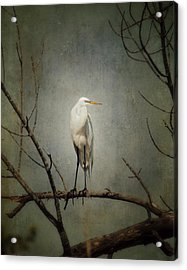 A Great Egret Acrylic Print