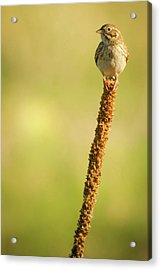 Acrylic Print featuring the photograph A Great Sense Of Balance IIi by John De Bord