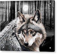 A Grey Wolf  Acrylic Print by Jasmina Susak