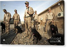A Group Of Dog-handlers Conduct Acrylic Print by Stocktrek Images
