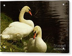 A Handsome Pair Acrylic Print