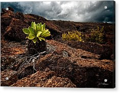 A Hard Existence Acrylic Print by Christopher Holmes