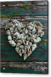 A Heart Made Of Shells Acrylic Print
