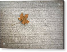 A Hint Of Autumn Acrylic Print by Scott Norris