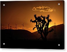 Acrylic Print featuring the photograph A Holy Joshua Tree by Peter Thoeny