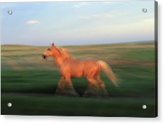 A Horse At Sandal Ranch Near Howes Acrylic Print