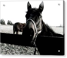 A Horse In The Country Acrylic Print