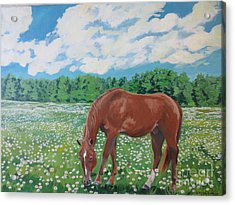 A Horse Named Dante Acrylic Print by Stella Sherman