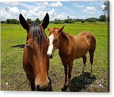 A Horse's Touch Acrylic Print