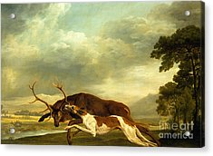 A Hound Attacking A Stag Acrylic Print by George Stubbs