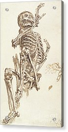 A Human Skeleton Acrylic Print