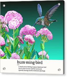 A Hummingbird Visits Acrylic Print