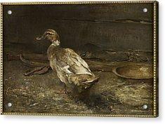 A Khaki Campbell Duck - Sir George Pirie Acrylic Print