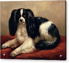 A King Charles Spaniel Seated On A Red Cushion Acrylic Print by Eugene Joseph Verboeckhoven