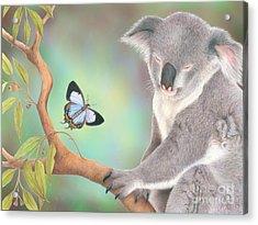 A Kiss For Koala Acrylic Print by Karen Hull