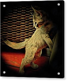 A Kitten Tail Acrylic Print by Dorothy Berry-Lound