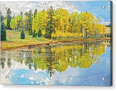 A Lakeside Willowwacks  Acrylic Print by Bijan Pirnia