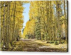 A Lane Of Gold Acrylic Print