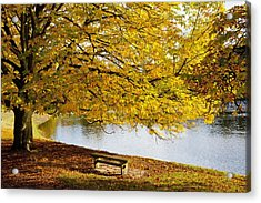A Large Tree And Bench Along The Water Acrylic Print by John Short
