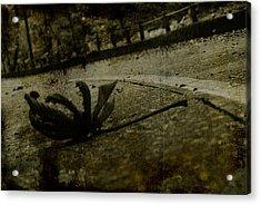 A Leaf By The Way Acrylic Print by Valmir Ribeiro