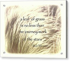 A Leaf Of Grass Walt Whitman Quote Acrylic Print