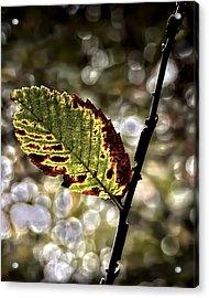 A Leaf Acrylic Print