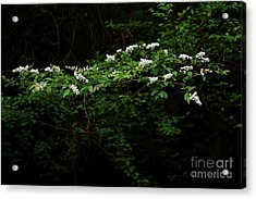 Acrylic Print featuring the photograph A Light In The Darkness by Skip Willits