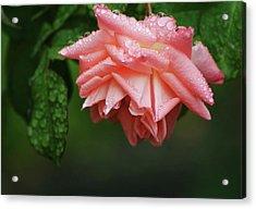 A Light Rain Acrylic Print by Terrie Taylor