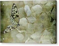 A Lighter Touch Acrylic Print by Lois Bryan