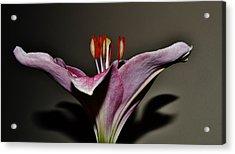 A Lily Acrylic Print