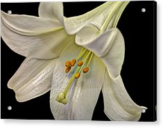 A Lily For Easter Acrylic Print by Deborah Klubertanz