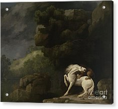 A Lion Attacking A Horse, 1770 Acrylic Print by George Stubbs