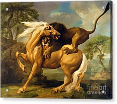A Lion Attacking A Horse Acrylic Print