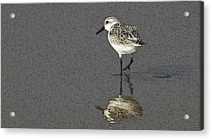 A Little Bird On A Beach Acrylic Print by Alex Galkin