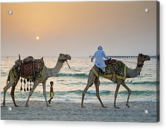A Little Boy Stares In Amazement At A Camel Riding On Marina Beach In Dubai, United Arab Emirates Acrylic Print