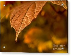 A Little Closer Acrylic Print by Lisa Phillips