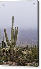 A Little Desert Fog  Acrylic Print by Saija Lehtonen