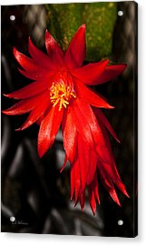 A Little Fire Acrylic Print by Christopher Holmes