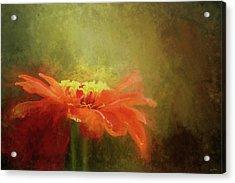 A Little Orange Wildflower Acrylic Print