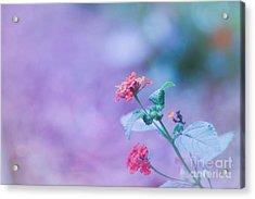 A Little Softness, A Little Color - Macro Flowers Acrylic Print