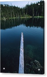 A Log Juts Out Over A Lake Acrylic Print by Bill Hatcher