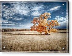 A Lone Tree Acrylic Print