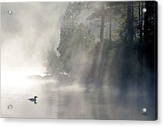 A Loon In The Mist Acrylic Print