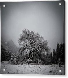 A Magic Tree Acrylic Print by Lora Lee Chapman