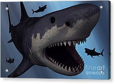 A Megalodon Shark From The Cenozoic Era Acrylic Print by Mark Stevenson