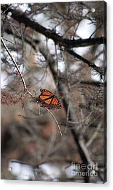 A Monarch For Granny Acrylic Print