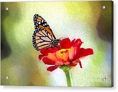 A Monarch Moment Acrylic Print