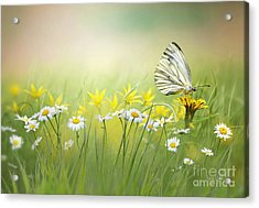 Light Wings Acrylic Print