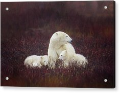 A Mother's Love Acrylic Print by Debby Herold