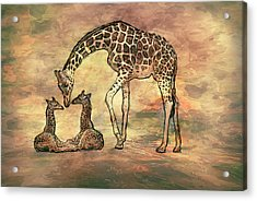 A Mothers Love Acrylic Print by Jack Zulli